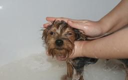 Boric acid in the bath helps treat your dog's itchy skin.