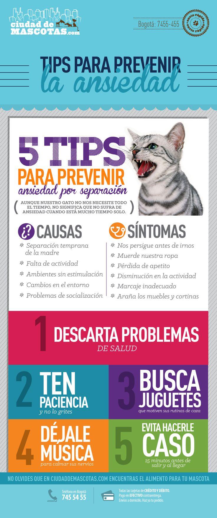 Los gatos aunque parecen independientes se apegan a su amo y a sus costumbres y es por esto que pueden sufrir de ansiedad.