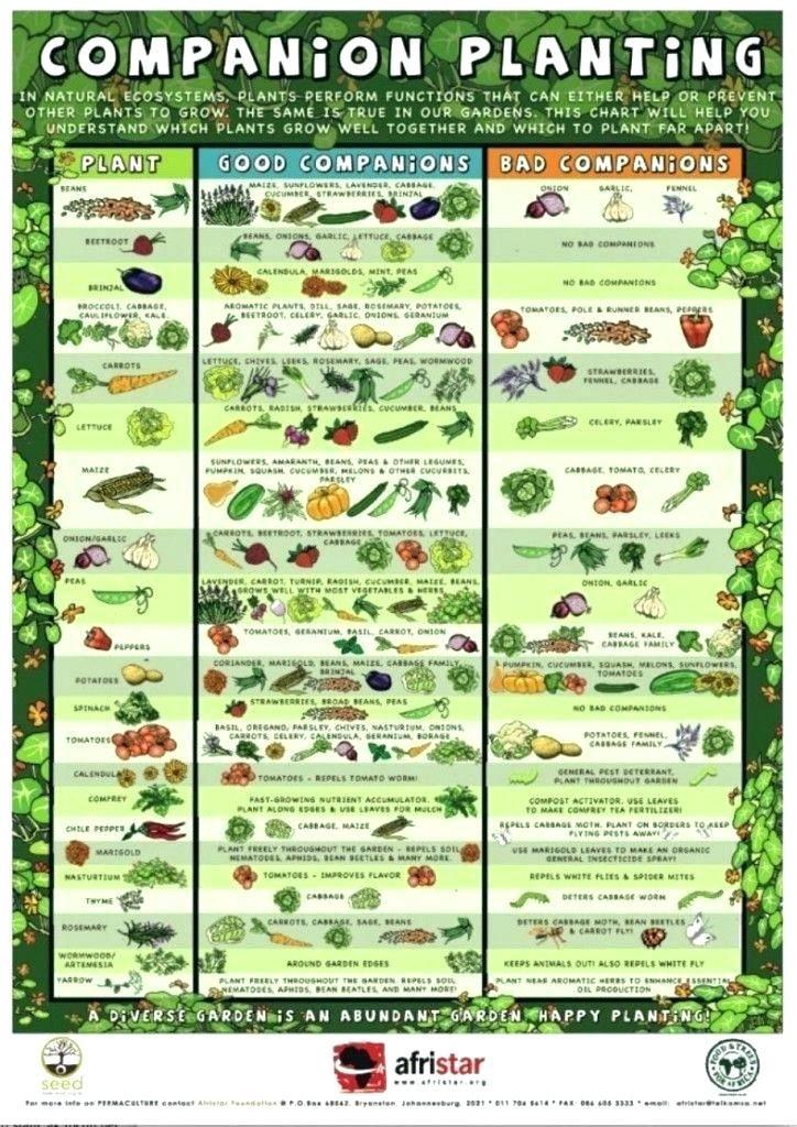 Raised Vegetable Garden Plans Raised Bed Vegetable Garden Layout