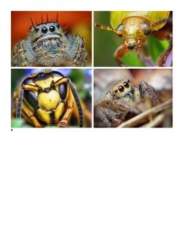 Interesting Insects Cards