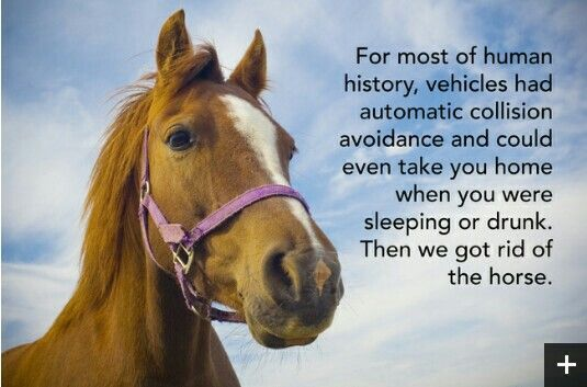 Horses! | Animal memes, Horses, Funny pictures with captions
