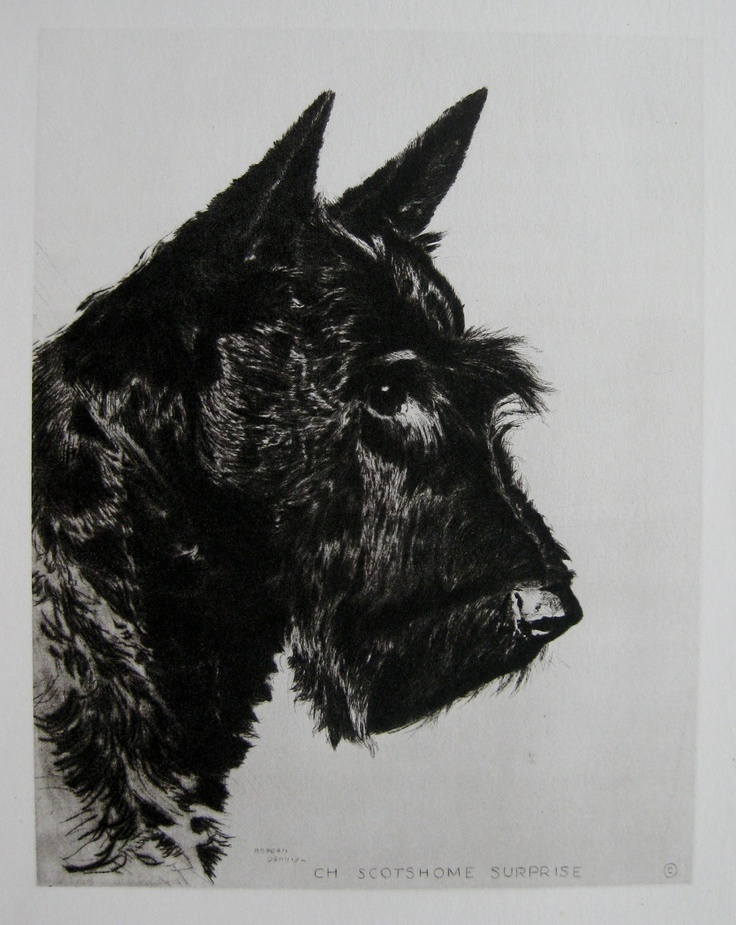 66 best dog tattoo 39 s images on pinterest scottie dogs scottish terriers and westies. Black Bedroom Furniture Sets. Home Design Ideas
