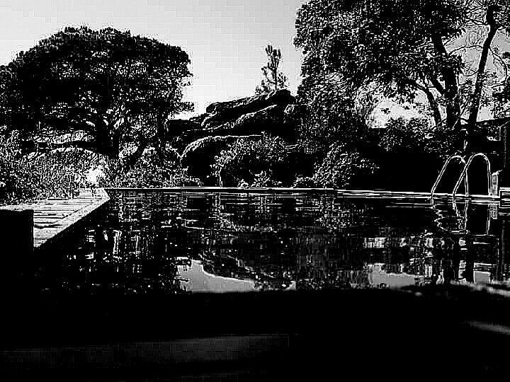 B&W - tree, rock and pool