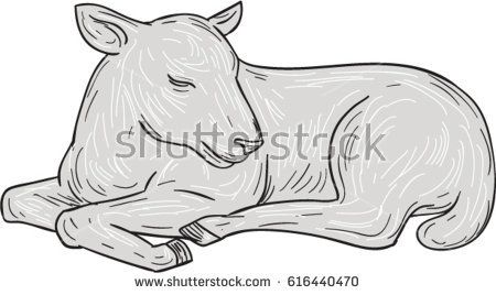 Drawing sketch style illustration of a lamb sleeping set on isolated white background.   #lamb #drawing #illustration