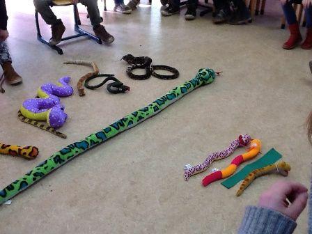 De kleuters mogen slangen meenemen naar de klas. We vergelijken welke het langste is. Thema jungle | Juf Anke lesidee kleuters