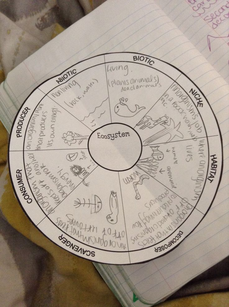 Ecosystem graphic organizer inside our 8th Grade Science Interactive Notebook.