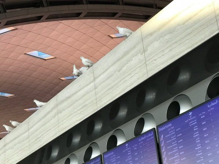Pigeons 'spotted' in the departure lounge of Hamad International Airport