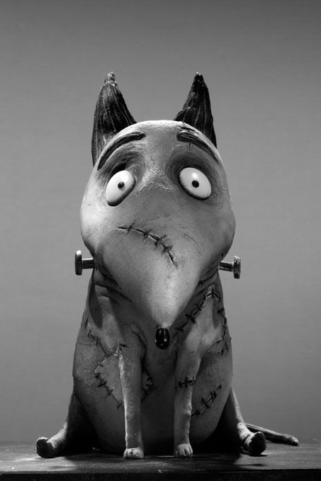 Sparky the star of Frankenweenie.