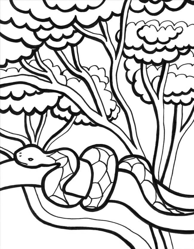 Jungle Coloring Pages Snake Coloring Pages Animal Coloring