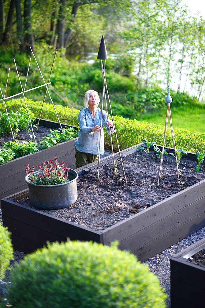 I år har jag verkligen väntat in värmen och jordtemperaturen. Först idag har jag planterat ut de förkultiverade vaxbönorna och luktärtorna. Förra året höll de på att frysa bort trots fiberdukar. Men nu hoppas jag verkligen att värmen håller i sig..