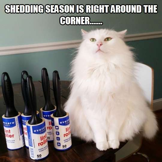 Better stock up on lint rollers. Shedding season is upon us.