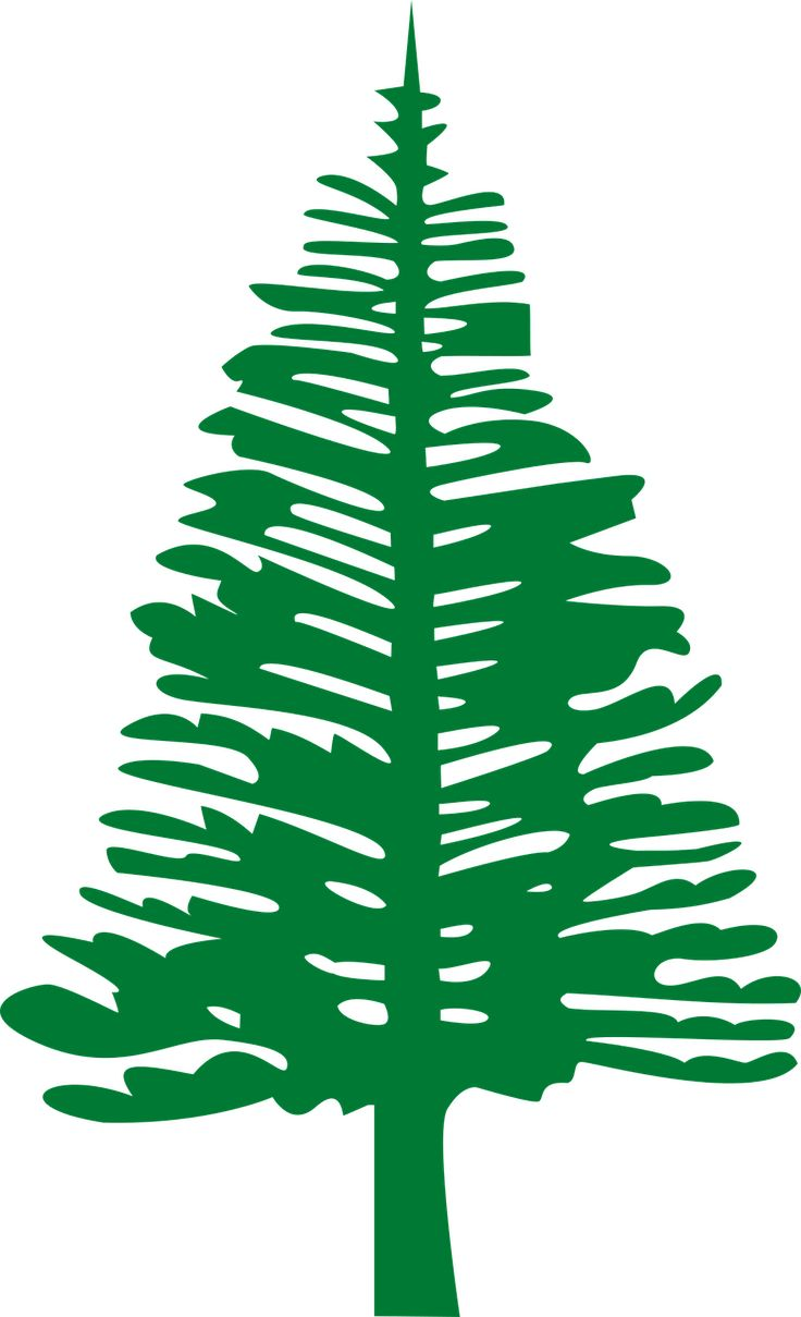 And information network araucaria heterophylla norfolk pine - Norfolk Island Pine Plant Tree Transparent Image
