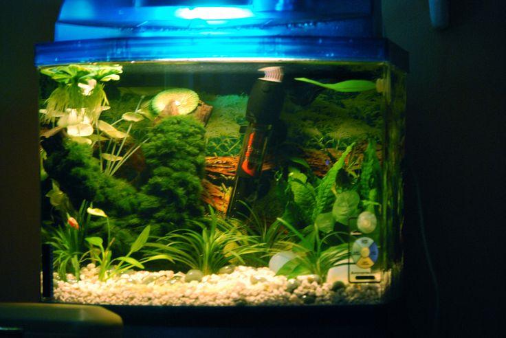 Best 25+ 10 gallon fish tank ideas on Pinterest   1 gallon ... 10 Gallon Fish Tank Ideas