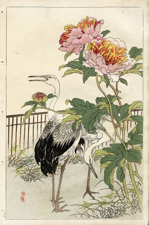 Crane, Peony . 1899  Japanese Woodblock prints by Kono Bairei  (1844-1895)