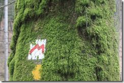 Moosbewachsener Baum