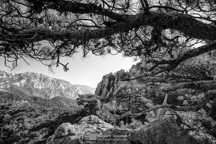 Under laricio pine branches, Calanca Murata, Bavella, Corsica, France, 2012 © Amaury Descours - All rights reserved