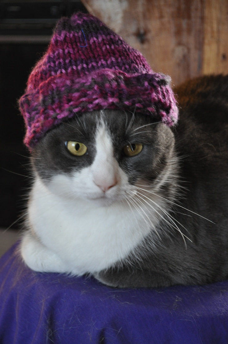 Cat Lady Knitting : Best images about dorian harmon designs on pinterest