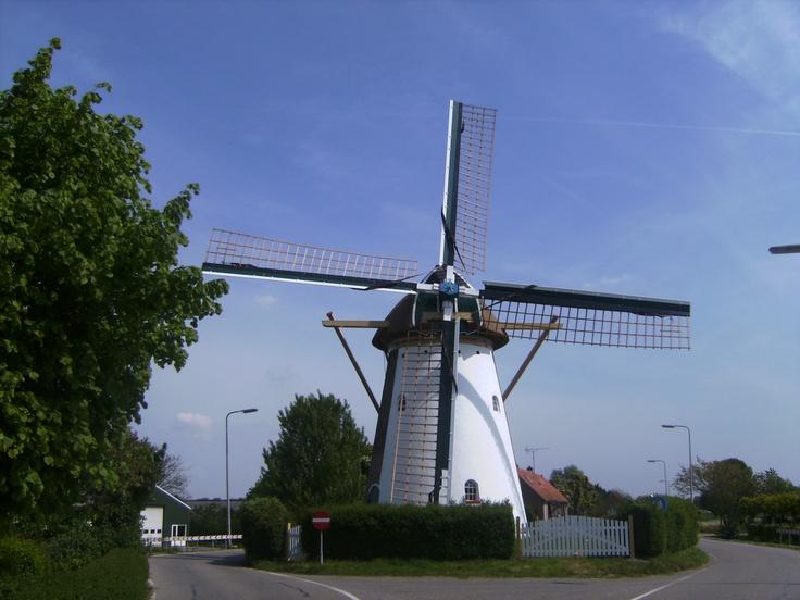 De molen van Rockanje aan de Molendijk. Mooi uit de 18e eeuw.