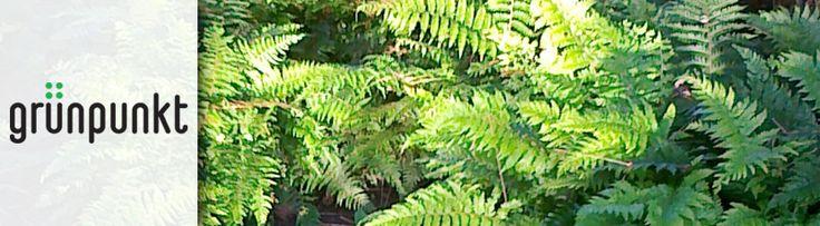 Grünpunkt in Winterthur Zürich kann Ihrem Garten durch eine moderne Gartengestaltung das Gewisse Etwas verleihen. Unsere jahrelange Erfahrung im Gartenbau, Landschaftsbau, Gartengestaltung, Teichbau hat sich immer wieder bewährt. Unsere Kunden wissen worauf sie sich verlassen können, wenn es um Grünpunkt, Naturgarten oder Steingarten geht. Unsere Gartenbauer sind dafür geschult und haben ein grünes Händchen für alles rund ums Garten.
