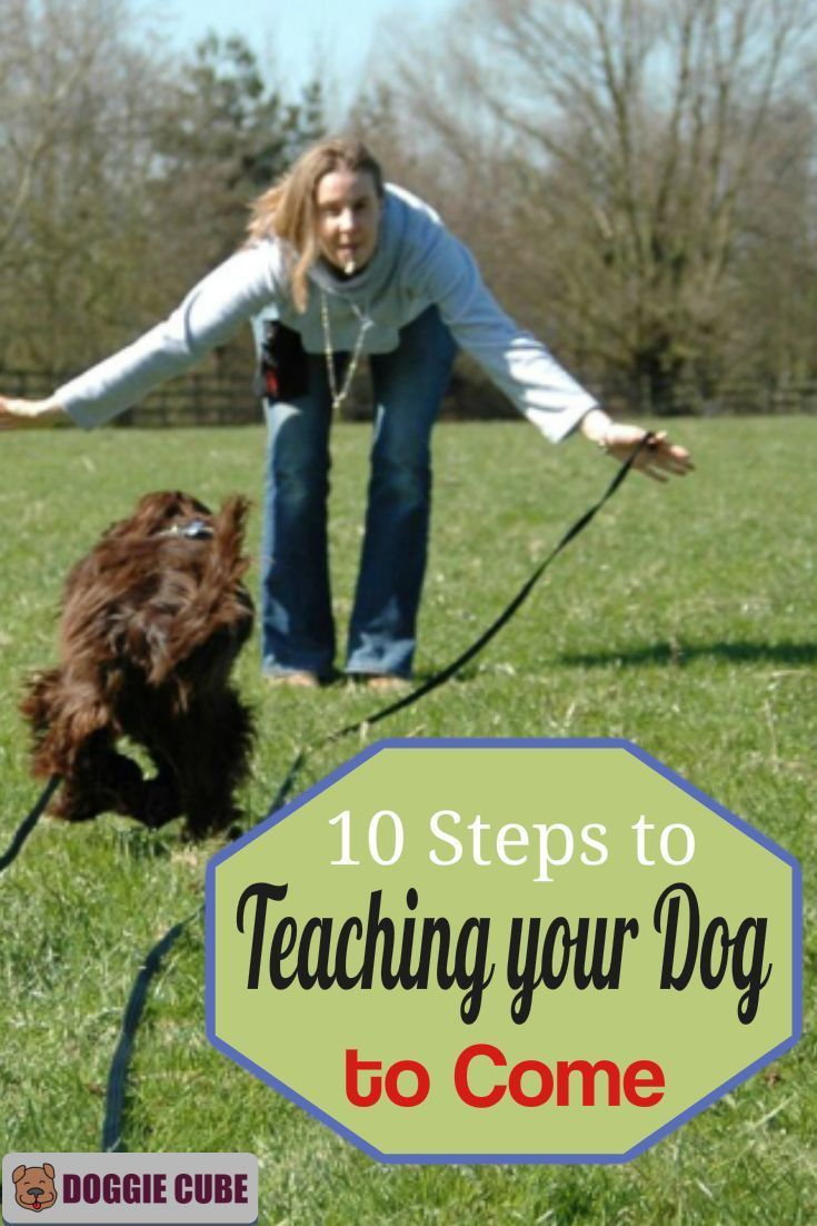 10 Steps To Teaching Your Dog To Come Dog Training Techniques
