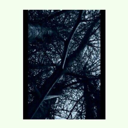 Árbol de vida, lleno de espinas