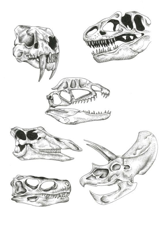 Dinosaur, skulls, dot work, Pointillism, Taxidermy, jurassic                                                                                                                                                                                 More