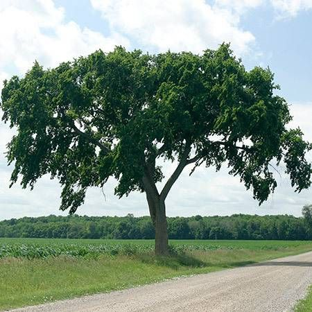 The 25 best elm tree ideas on pinterest elm tree bark for What kind of paint to use on kitchen cabinets for metal wall art trees and leaves