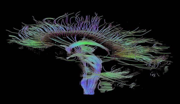 La memoria, uno degli strumenti più potenti della mente umana. Scopritene tutti i segreti!