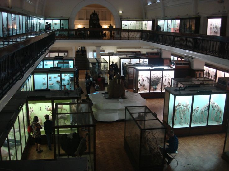 Wildly eclectic - the Horniman Museum, London