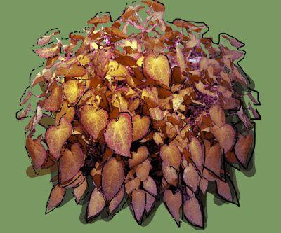 Epimedium red