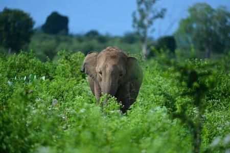 Elephant at Yala National Park Photo by john anthony -- National Geographic Your Shot