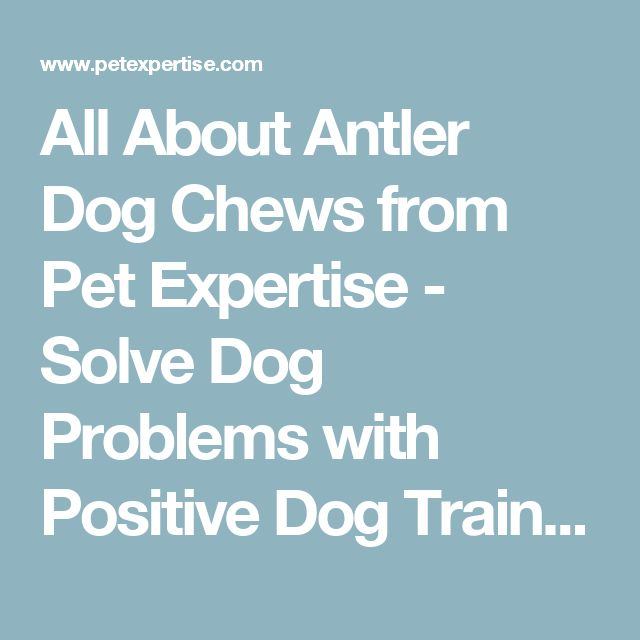 All About Antler Dog Chews from Pet Expertise - Solve Dog Problems with Positive Dog Training! Featuring the Freedom No-Pull Dog Harness, Antler Chews and Treat & Train http://www.dogysnacks.com/product-category/dog-houses-crates-kennels/dog-houses/