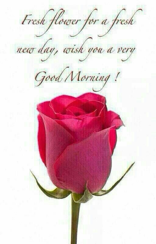 Lovely rose for a beautiful girl  gudmorng :) Have a