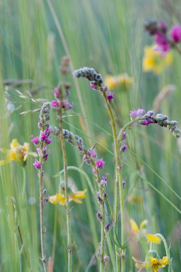 Florali-wildflowers7