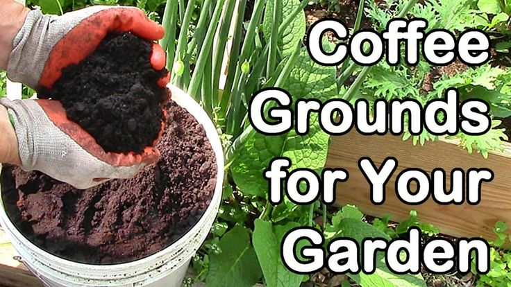 Coffee grounds can be a great catalyst for your garden adding it can help to enrich the soil for How to use coffee grounds in garden