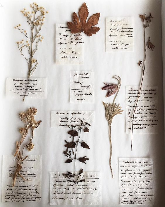 A Few Pressed Flowers & Leaves ~ Memories of a Walk in the Country ....