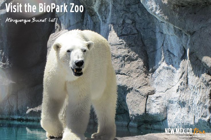 It's the end of the summer and everyone is heading back to school. My best friend and I have an annual tradition of going to the Albuquerque BioPark