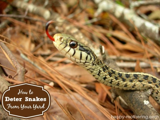 How To Deter Snakes From Your Yard More Snake Yards And Gardens Ideas
