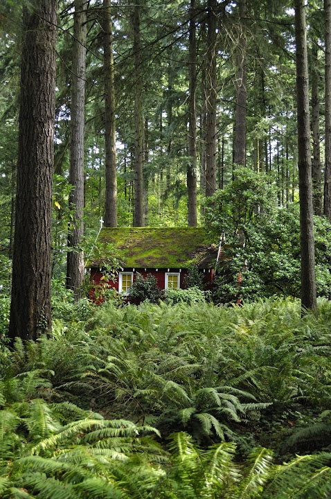 Red cabin in Portland OR. Wow - look at all the cool ferns!!
