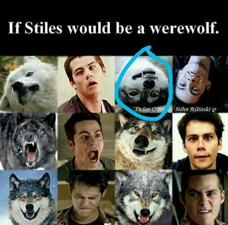 Картинки волчонок смешные