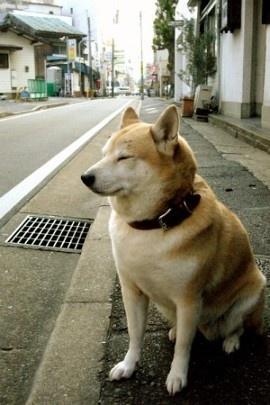 カメラノカンヅメ Canned Camera | 路傍の犬