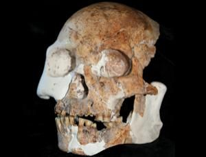Parts of the fossilized skull of a  Red Deer Cave man: a testament of the wonders of human evolution