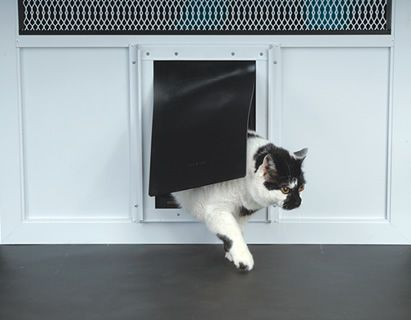 27 Best Look What Came Thru The Doggy Door Images On