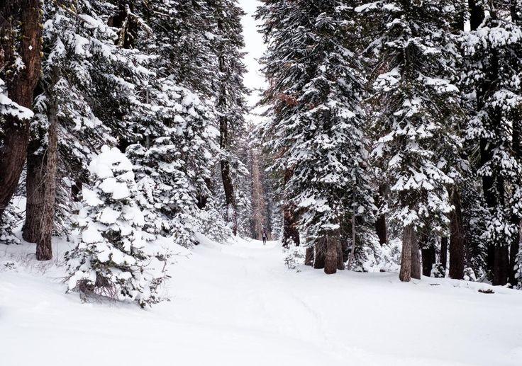 ✳ White Snow Covered Trees in Snow Covered Ground - new photo at Avopix.com    🏁 https://avopix.com/photo/50493-white-snow-covered-trees-in-snow-covered-ground    #snow #weather #ice #winter #cold #avopix #free #photos #public #domain