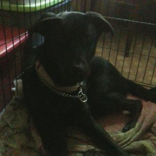 My dog BlackJack :) pets-animals