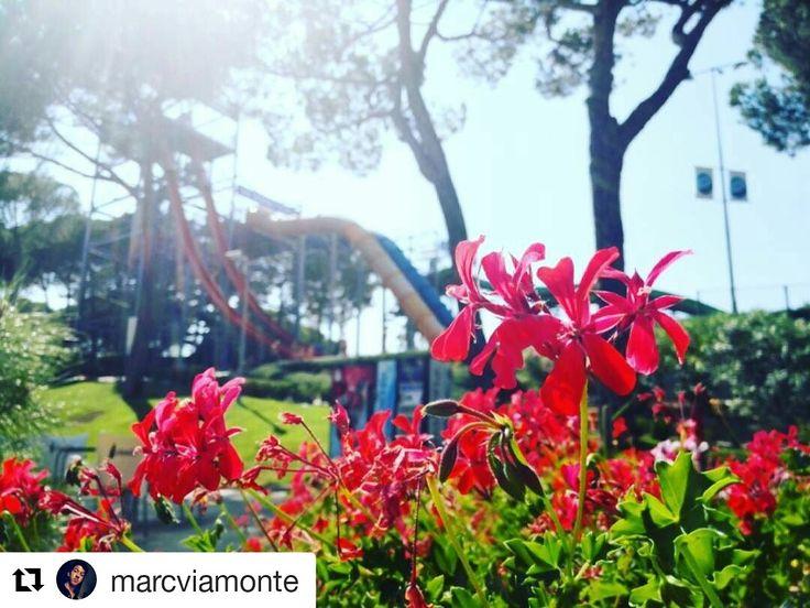 Com cada dijous avui compartim una de les millors fotos que heu tirat aquest estiu al parc. Us agrada aquesta d'en @marcviamonte? A nosaltres ens encanta!   #waterworldlloret #waterpark #LloretdeMar #viulloret #costabrava