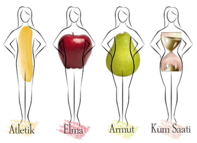 Vücut Tipleri