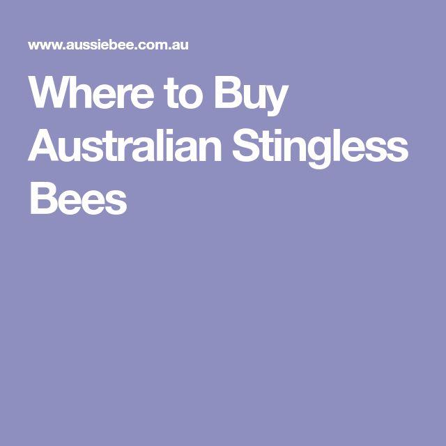 Where to Buy Australian Stingless Bees