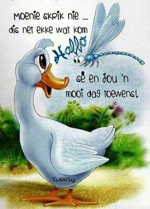 Good Morning Everyone In Afrikaans : Best goeie môre nag images on pinterest