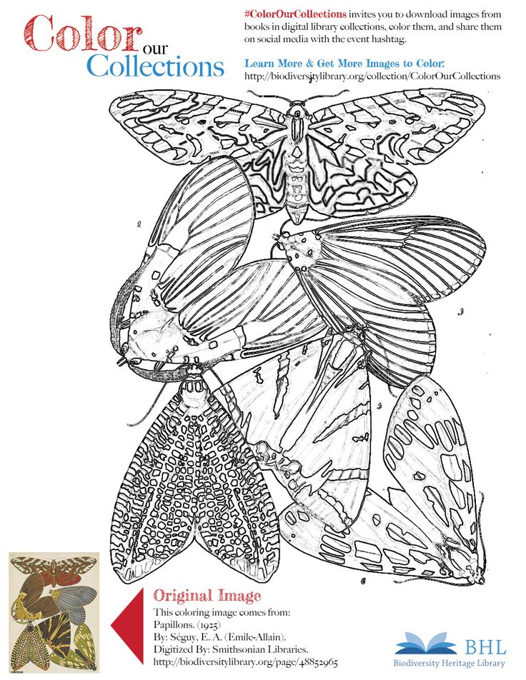 """#ColorOurCollections. Original Image: http://biodiversitylibrary.org/page/48852965. To download this image, right click on the pin and choose """"save image as"""" to save the image to your computer. You can then print and color at your leisure!"""